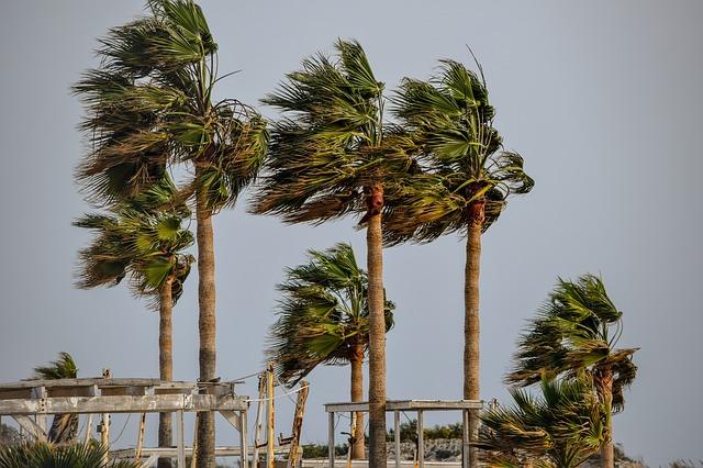 Tampa Wind Mitigation